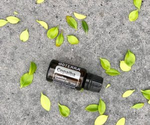 Oil Drops of Wisdom – Copaiba