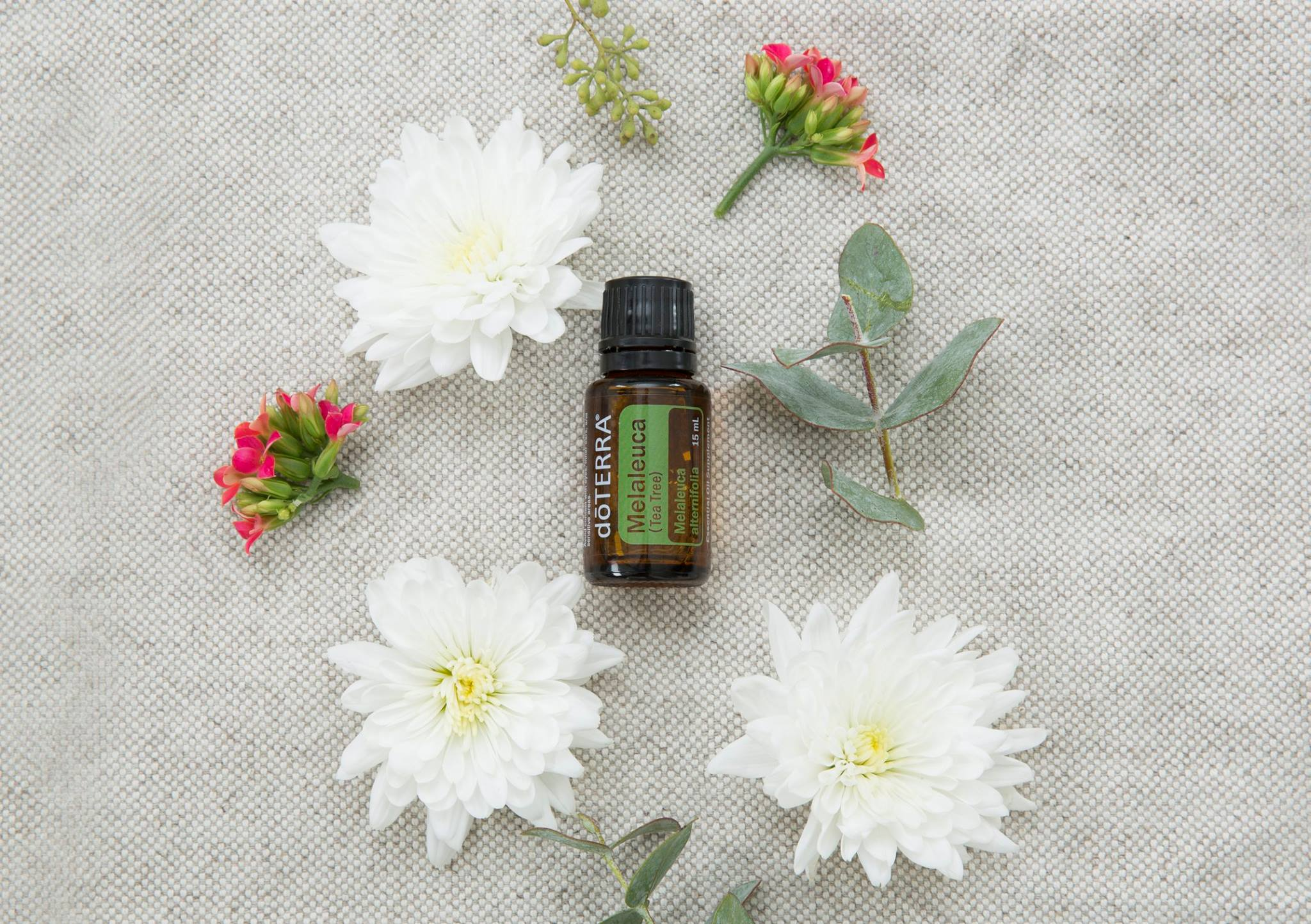 Oil Drops of Wisdom – Melaleuca