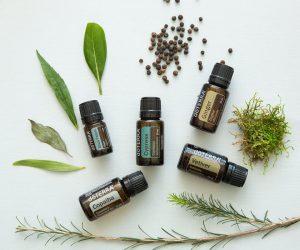 Oil Drops of Wisdom – Cypress